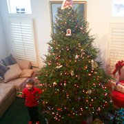 our photo of green valley christmas trees mountain view ca united states - 15 Foot Christmas Tree