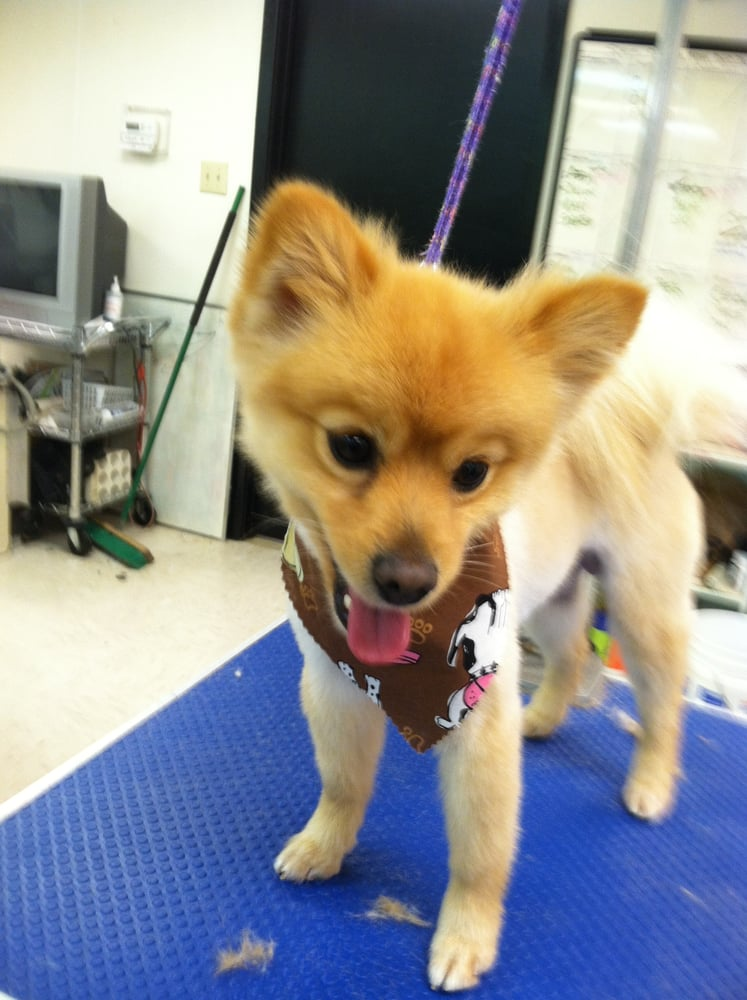 You Lucky Dog Mobile Grooming Service Fort Worth Tx