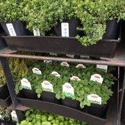Photo Of Blue Hills Nursery Gift Whittier Ca United States