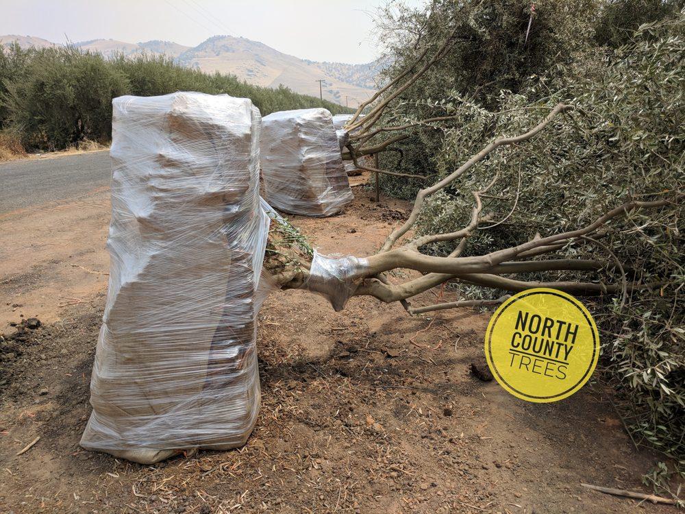 North County Trees: Atascadero, CA