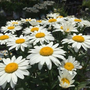 Seoane Landscape Design Garden Center 51 Photos 19 Reviews