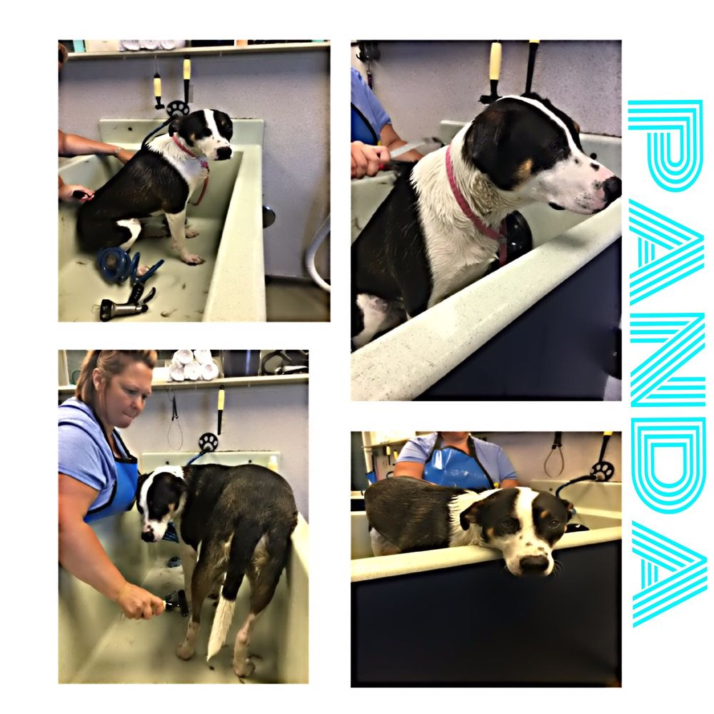 The Soggy Doggy: 7518 40th St W, University Place, WA