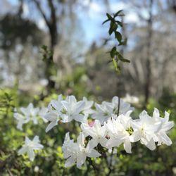 Magnoliaplantation And Boat Tour