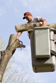 Becker Tree Service: 603 E Fifer St, Colfax, IL