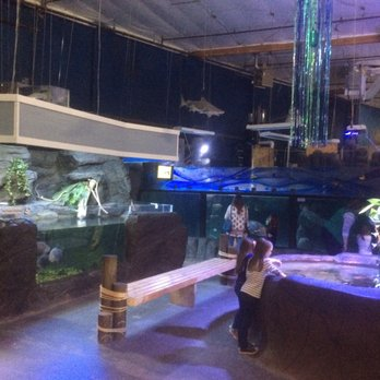 aquarium of boise 72 photos 58 reviews aquariums 64 n cole