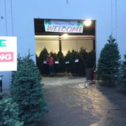 Griswold Family Christmas Trees - 10 Photos & 15 Reviews ...