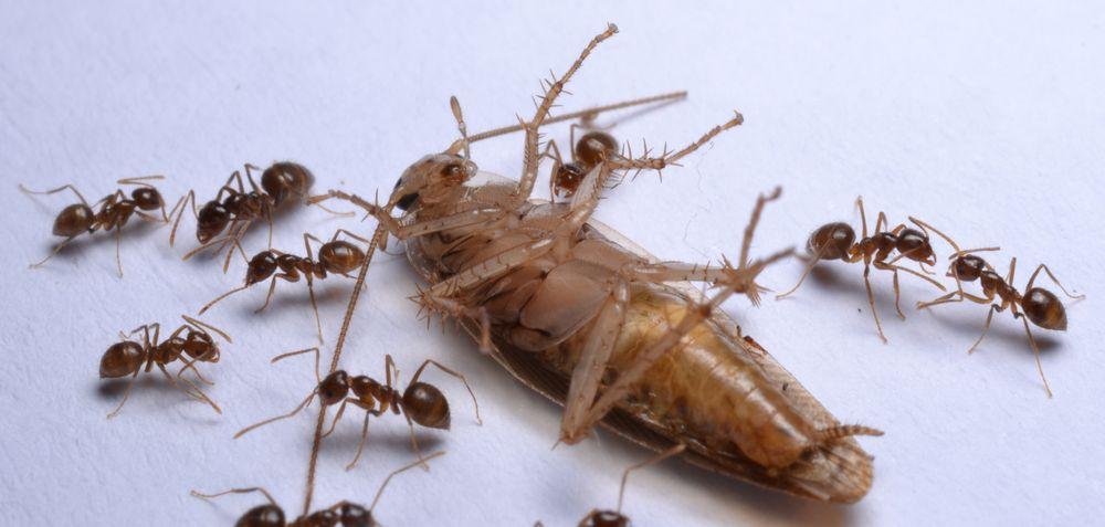 901 Pest Control: 453 Distribution Pkwy, Collierville, TN