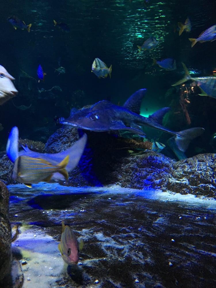 Photos For Sea Life Grapevine Aquarium Yelp