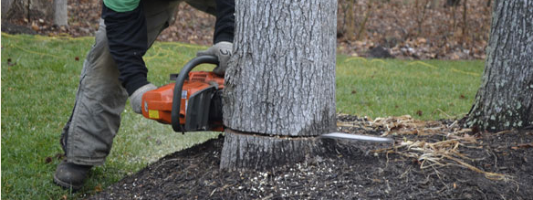 Southern Tree Service: 5405 Leonardtown Rd, Waldorf, MD