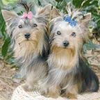 The Dog House Grooming Salon: 712 W Cherokee St, Blacksburg, SC