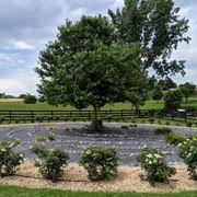 White Oak Lavender Farm - 137 Photos & 59 Reviews