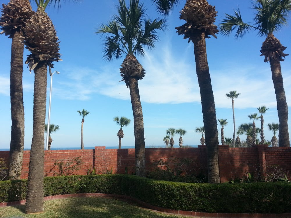 The Tree Amigos: Corpus Christi, TX