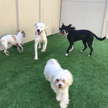 Dog Day Care In Fort Myers Fl