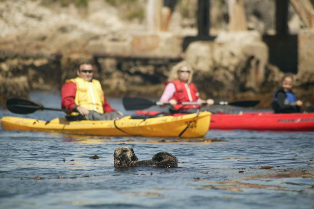 Adventures By The Sea Tours Monterey Ca Reviews