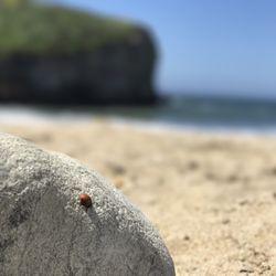Bonny Doon Beach - 280 Photos & 64 Reviews - Beaches - Hwy 1 N