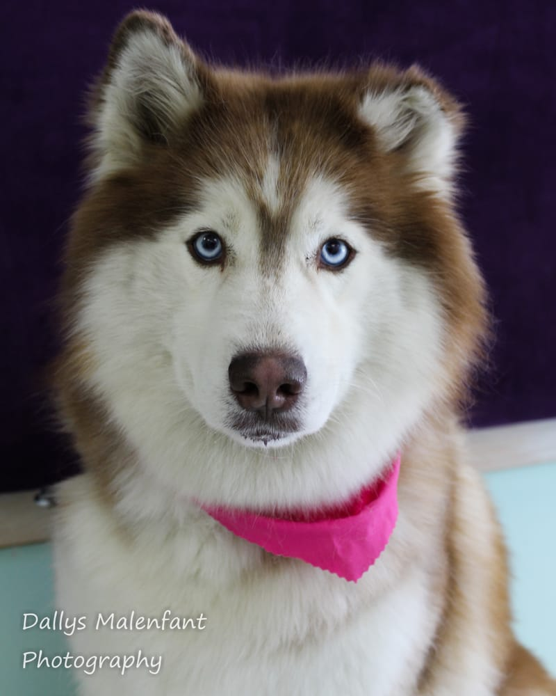 The Doggie Spaw at Jeni the Groomer: 76 Rt 101A, Amherst, NH