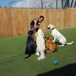 Chasing Tails 4 U Athletic Club 4 Dogs - 22 Photos & 18 ...
