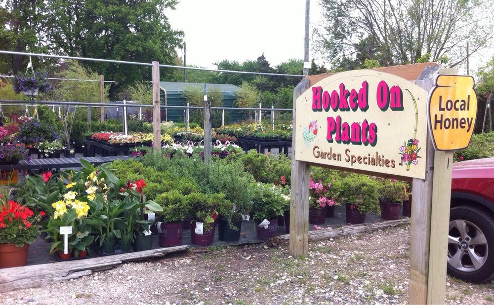 Hooked On Plants: 20144 John J Williams Hwy, Lewes, DE