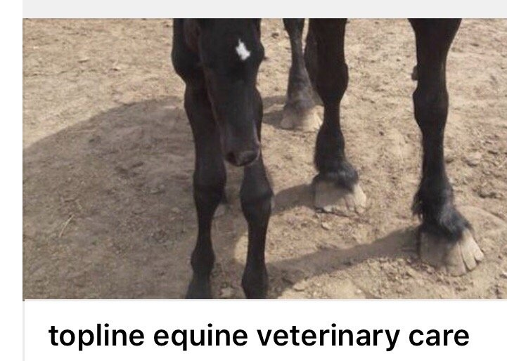 Topline Equine Veterinary Care: 3087 130th Ave, Glenwood City, WI