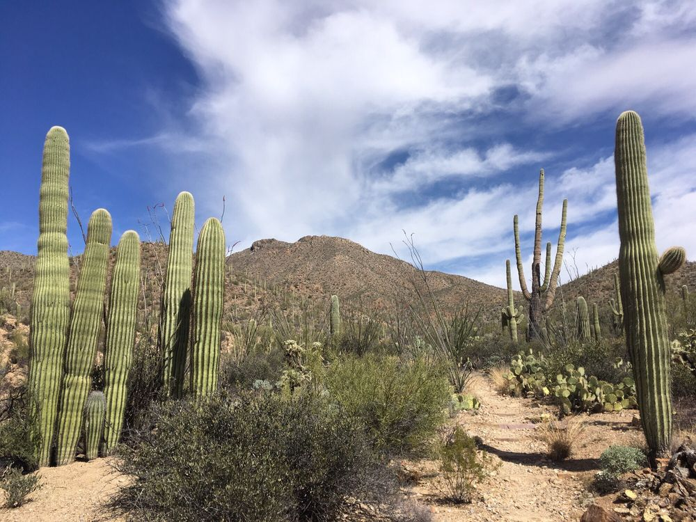 King Canyon Trailhead