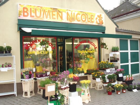 blumen nicole blumenladen florist lainzerstr 153 hietzing wien telefonnummer yelp. Black Bedroom Furniture Sets. Home Design Ideas