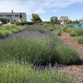 Hood River Lavender - 44 Photos & 23 Reviews - Flowers