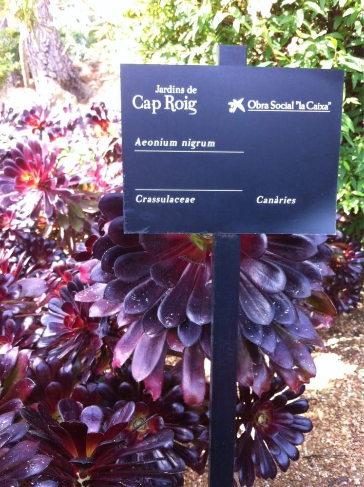 Jardins de cap roig jardin botanique calella de for Jardin botanico cap roig