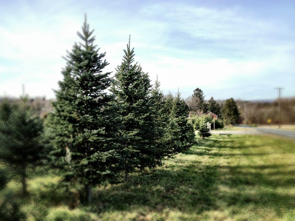 Beck's Christmas Trees Christmas Trees 763 S Delaware Dr  - Becks Christmas Tree Farm