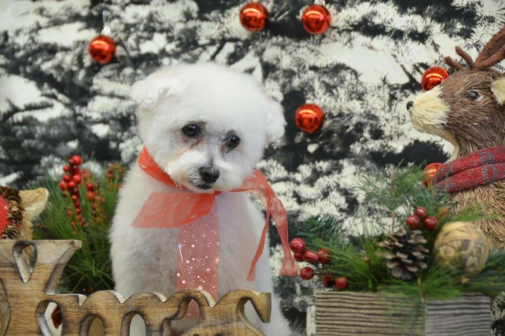 American Pet Dog Grooming In Glendora