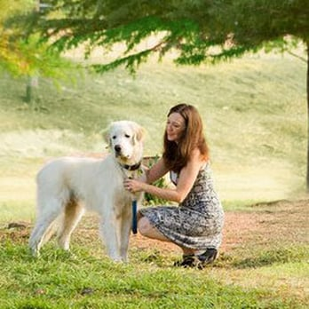 sedating a dog with valium Learn about tranquived injectable (dogs and cats) for animal usage including: its sedative and analgesic activity is related to central nervous system depression.