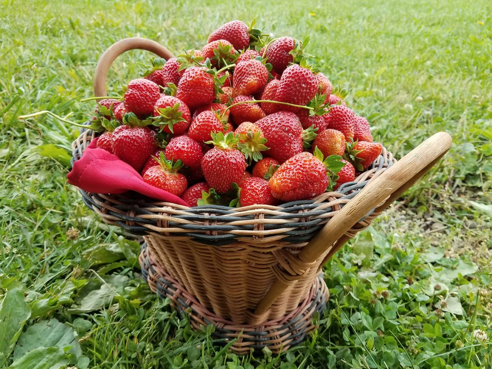 Mitchell's Berries: 9331 Mitchell Dewitt Rd, Plain City, OH