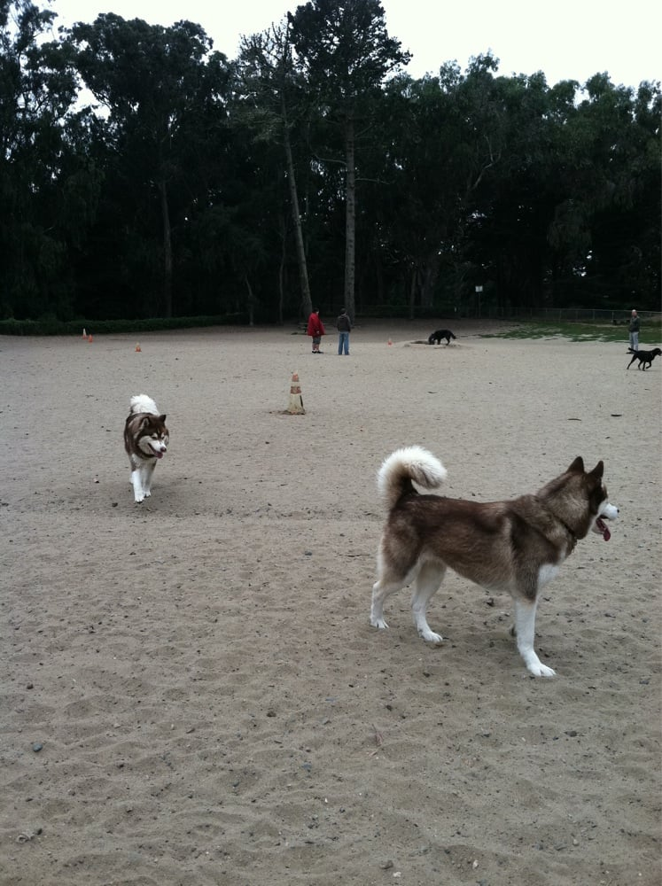 Best Fenced Dog Park In San Francisco