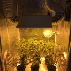 Photo of The Grow Room - Nyack NY United States. Display - Peperoncini & The Grow Room - Nurseries u0026 Gardening - 8 Bridge St Nyack NY ...