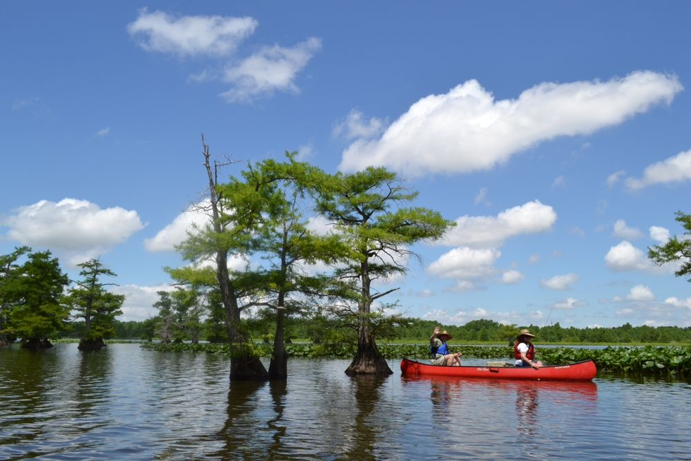 Reelfoot Lake State Park: 2595 Highway 21 E, Tiptonville, TN