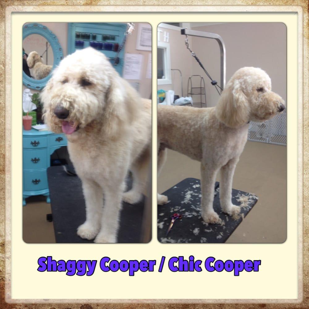 Dog Grooming Santa Rosa