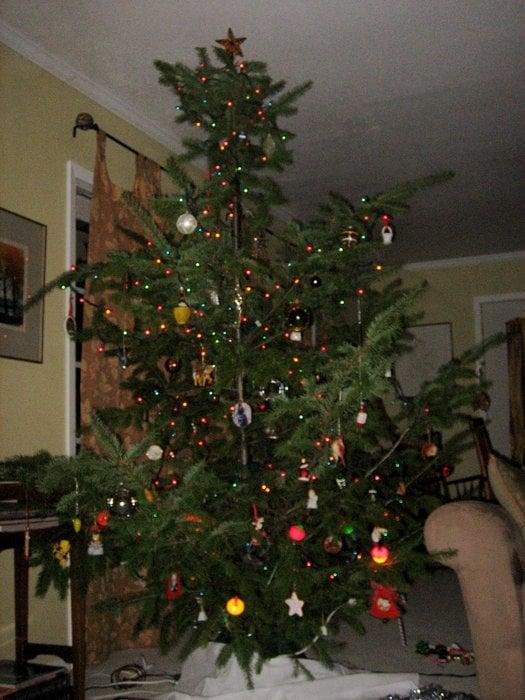 Mendocino National Forest Christmas Tree Permit Program: 78150 Covelo Rd, Covelo, CA