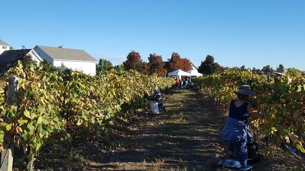 Blue Mountain Vineyards: 4480 Hoot Owl Dr, Berthoud, CO
