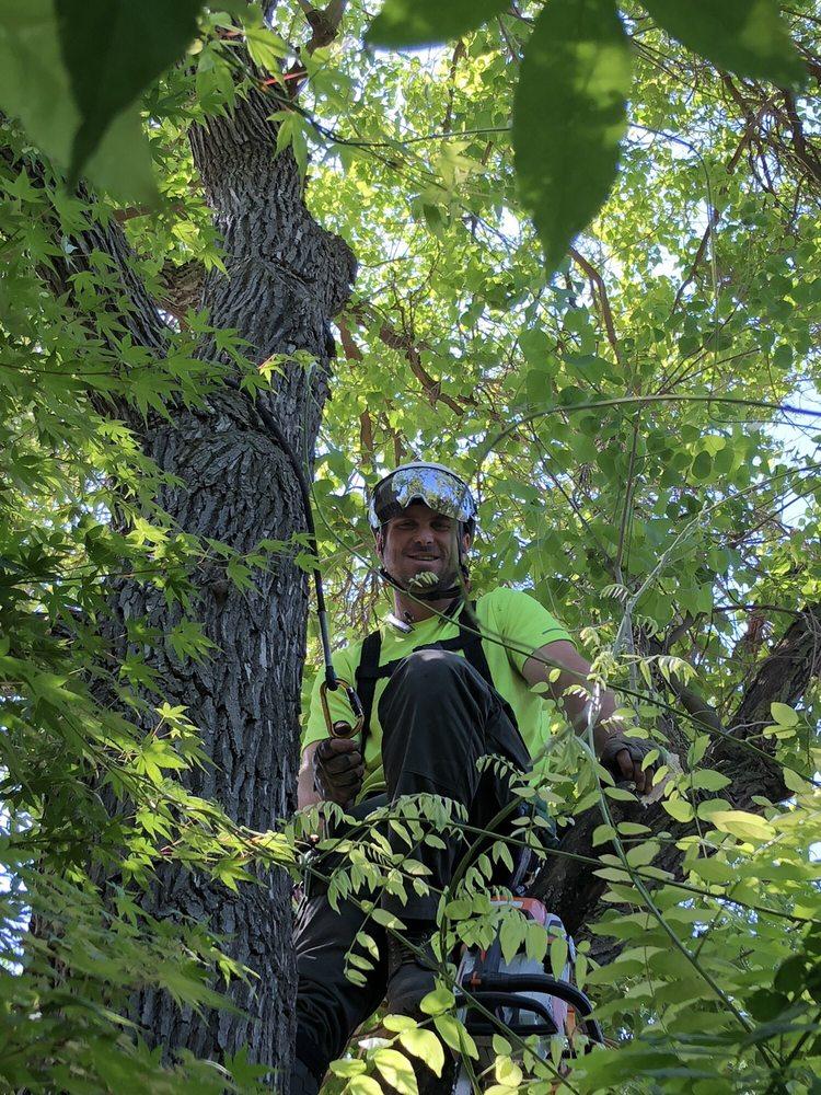 Mills Tree Expert