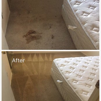 All In One Carpet Care 53 Photos Amp 59 Reviews Carpet