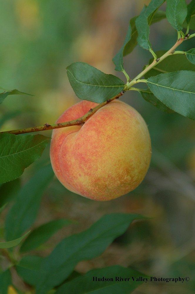 Prospect Hill Orchards: 73 Clarks Lane, Milton, NY