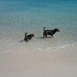 Photo Of Animal Exercise Beach Hillarys Western Australia Australia My Boys Swimming
