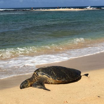 Poipu Beach 675 Photos 307 Reviews Beaches 1959 2177 Hoone Rd Koloa Hi Phone Number Last Updated December 18 2018 Yelp