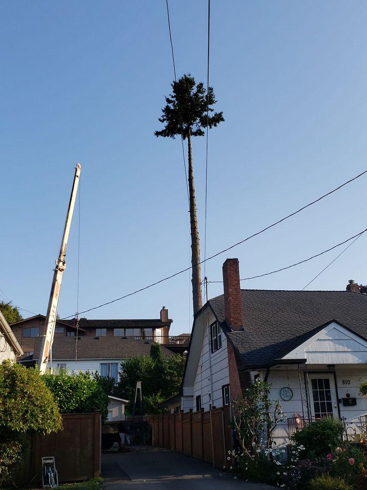 Chopping Block Tree Service: 6807 211th Ave SE, snohomish, WA