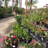 Photo Of Seaside Growers Nursery San Juan Capistrano Ca United States