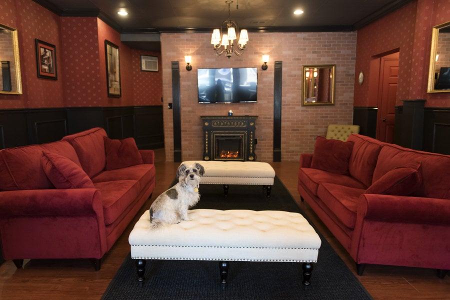 Executive Dog Lounge