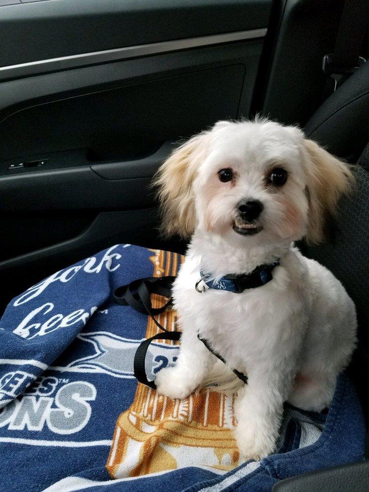 Scrub A Pup Pup: 256 Spring Mill Ave, Conshohocken, PA