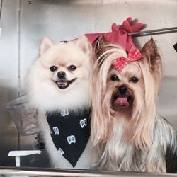 Smile mobile grooming 44 photos 48 reviews pet groomers photo of smile mobile grooming woodland hills ca united states solutioingenieria Gallery