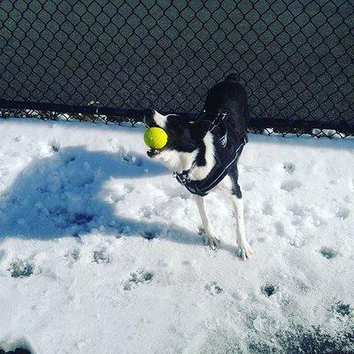 Dani's Pet Care 32 Sewall Ave Winthrop, MA Dog Training