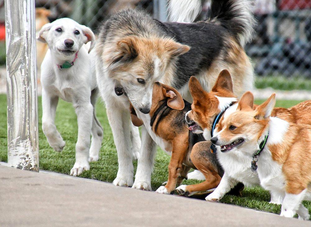 Dog Party USA: 912 S Maestri Rd, Springdale, AR