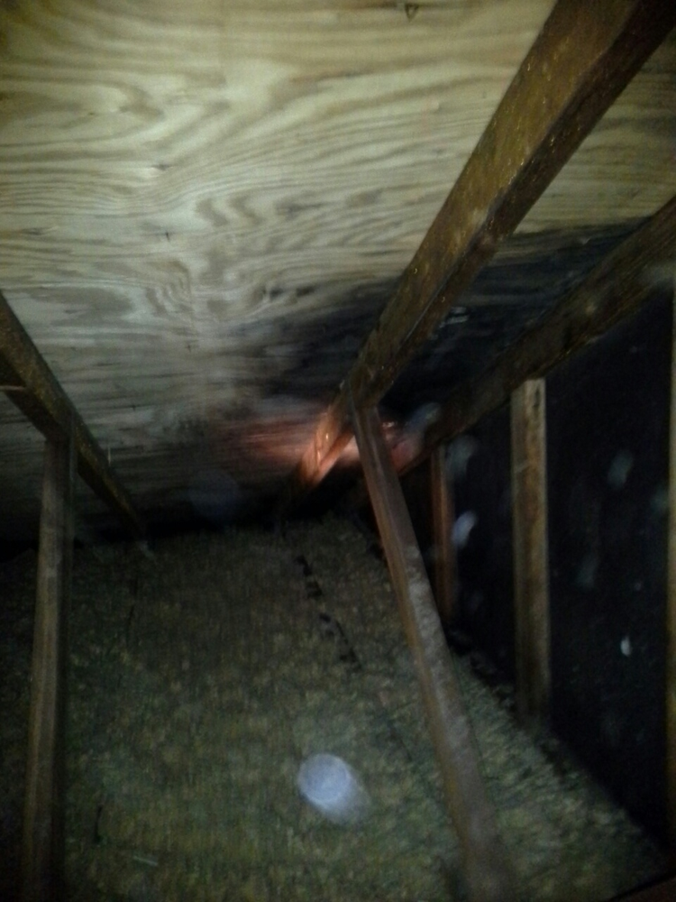 Plywood Has Black Mold In Attic Yelp